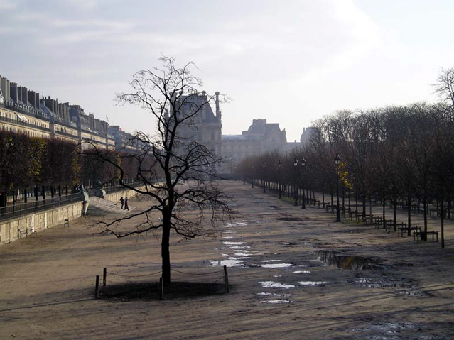 Tuileries on a mid-December morning. © Erin Zaleski